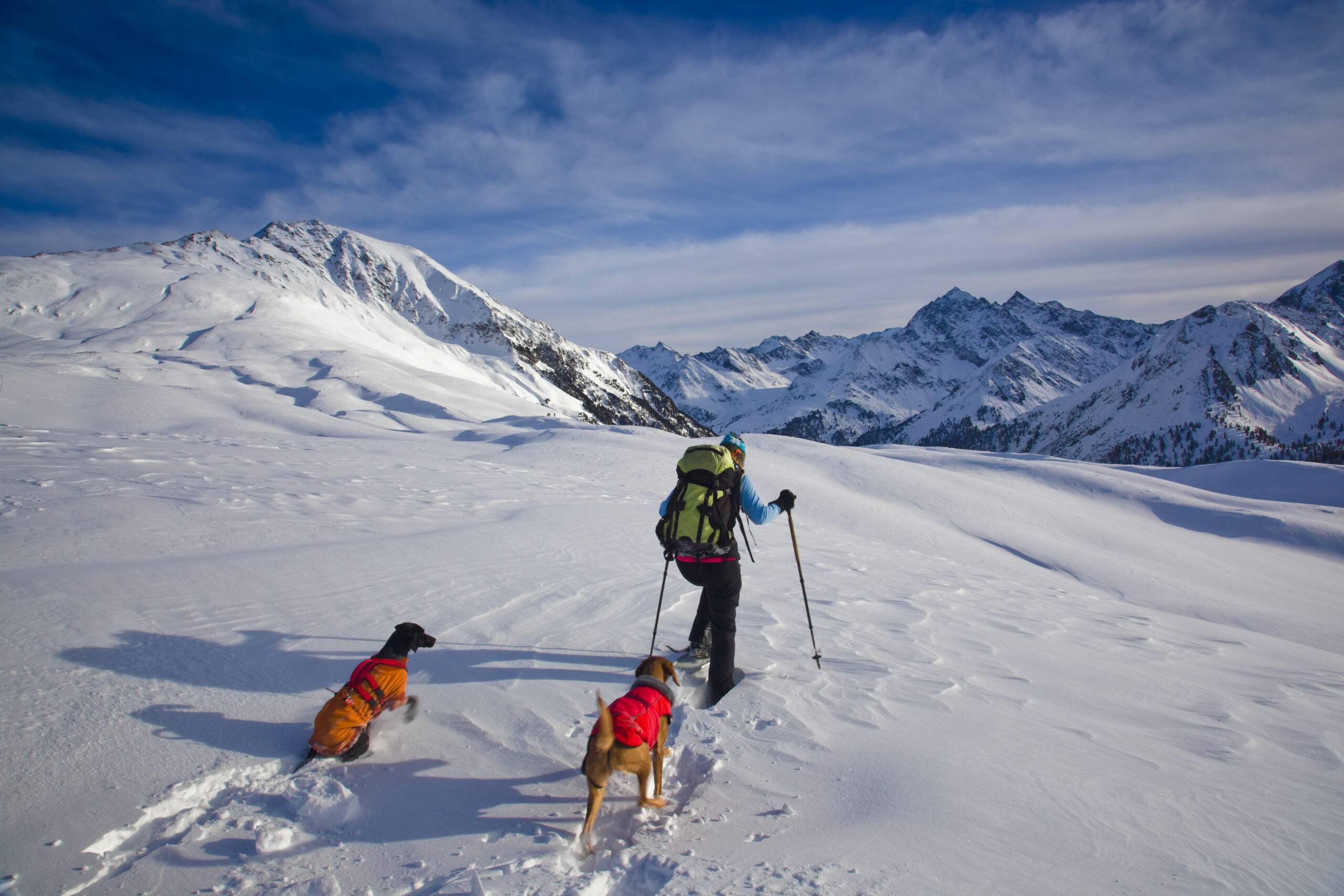 A man and his dogs snowshoeing on a mountain
